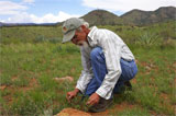 Growing Native with Petey Mesquitey: An Urge to Save the Desert