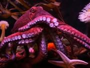 Lessons In Counterterrorism From The Octopus